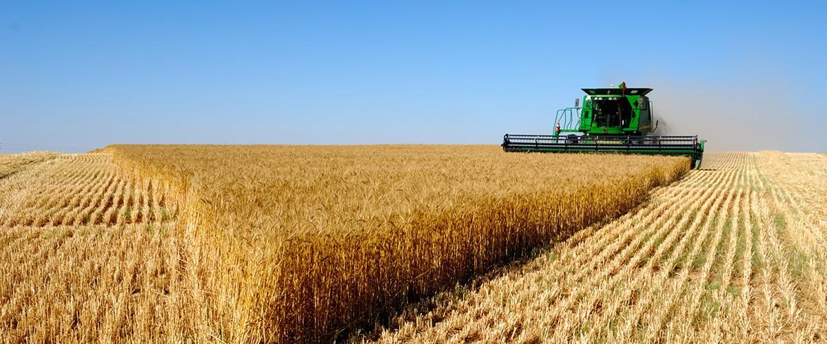 الحبوب والبقوليات المناخ متعدد المخاطر