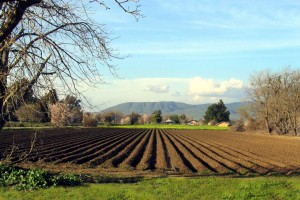 كيف يمكن تقليص المخاطر المهنية داخل مزرعتكم الفلاحية ؟