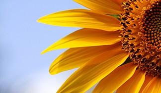 التأمين متعدد المخاطر المناخية على البذور الزيتية